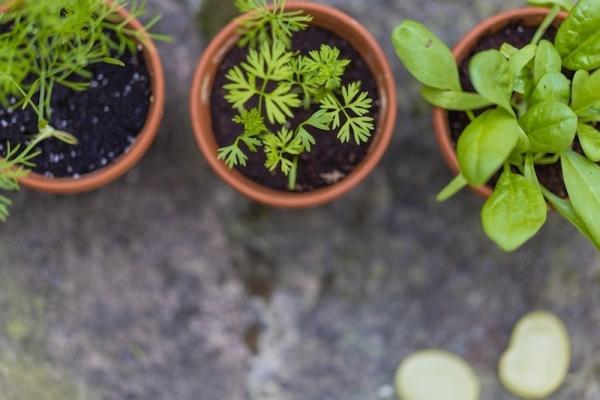Preparazione dell'orto: piante in vaso