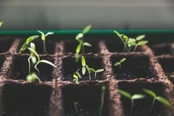 Preparazione dell'orto: semina e crescita piccole piante