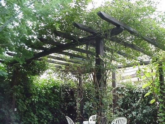 Pergola in legno con rampicanti - Piangoli Legno