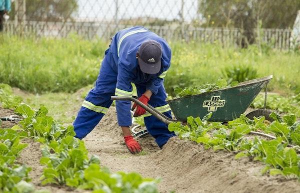 Preparazione di un orto biologico