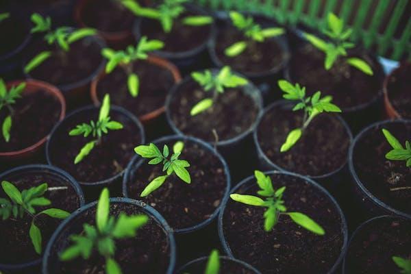 Preparazione orto: la semina