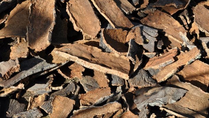 Il sughero si ricava dalla corteccia della Quercia da sughero