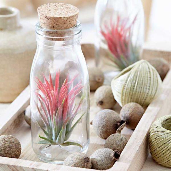 Piante senza radici in bottiglia su Bakker.com