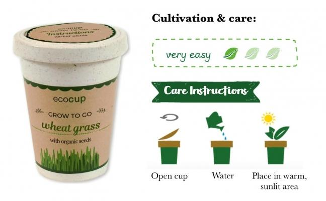 Tazza ecologica con dentro piantina Eco Cup su Grin-eco-gadget.it.