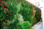Giardino verticale su muro confine - Pellegrini Giardini