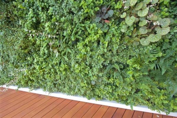 Muro vegetale esterno - Sundar Italia