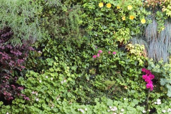 Piante di giardino verticale esterno - Sundar Italia