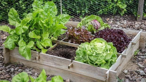 Attrezzi per l'orto: le migliori occasioni online