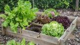Attrezzi per l'orto: i migliori prezzi online