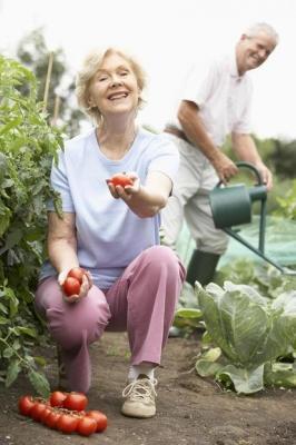 Coltivare ortaggi e frutta nell'orto domestico