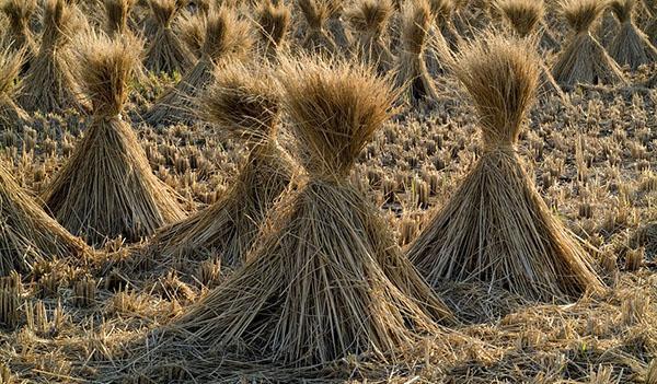 La paglia è un materiale da costruzione economico e sostenibile