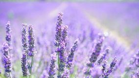 Giardino dei semplici: coltivazione di piante aromatiche e officinali
