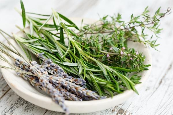 Erbe aromatiche per la cucina