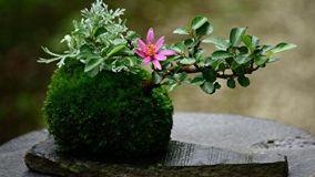 Kokedama per realizzare un giardino sospeso