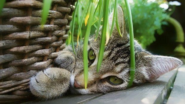 Piante tossiche per gatti e cani, ecco quali specie evitare