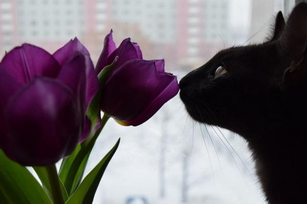 Alcune piante sono tossiche per i gatti