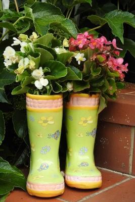 La Begonia è tra le piante velenose per gatti