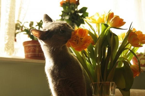 Attenzione pure ai tulipani