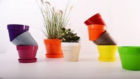 È home gardening mania: ecco le tendenze del momento