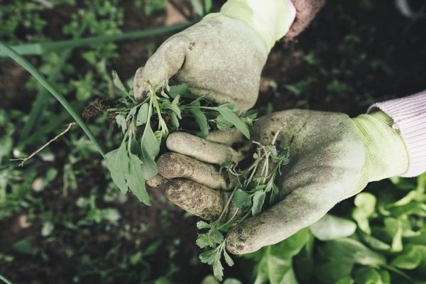 Italiani appassionati di home gardening