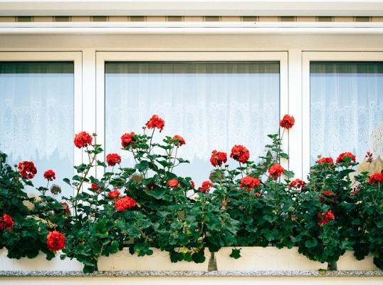 Home gardening in piccoli balconi