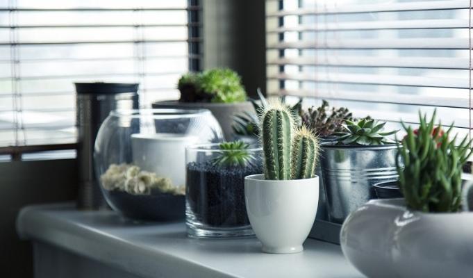 Composizioni di piante grasse e bonsai