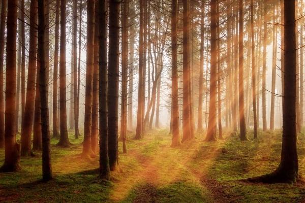 Scegliere parquet certificati è un contributo alla salvaguardia delle foreste