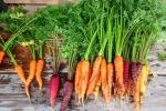 Un materiale ecocompatibile di nuova generazione è il cemento a base di carote