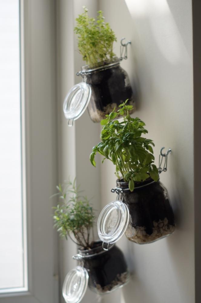 Barattoli di vetro usati come vasi per le erbe aromatiche, da amigaprincess.com