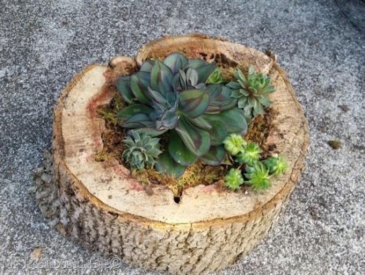 Realizzare dei vasi fai da te con un tronco di legno, da myrepurposedlife.com