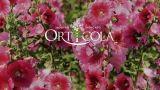 Orticola 2019: mostra mercato dedicata al verde