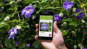 App per il riconoscimento di piante e fiori