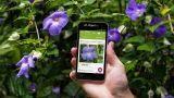 App per riconoscere piante e fiori
