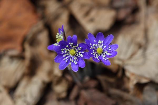 Rionoscere piante e fiori grazie a un'App