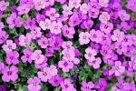 Riconoscimento fiori e piante