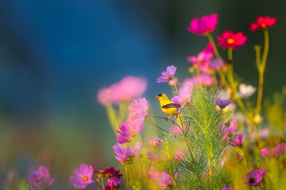 Piante e fiori: come riconoscerne il nome e le caratteristiche