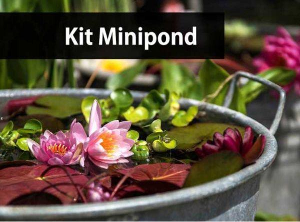 Kit minipond di Hydrophyllum.it