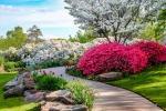 Cura rododendro