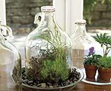 Terrario in bottiglia
