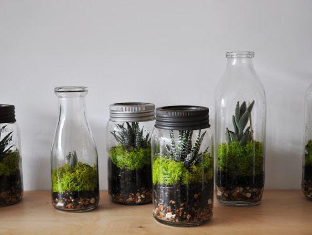 Microgiardini in bottiglia