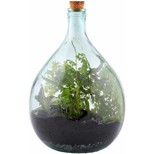 Set ecosistema terrarium in vetro - ManoMano