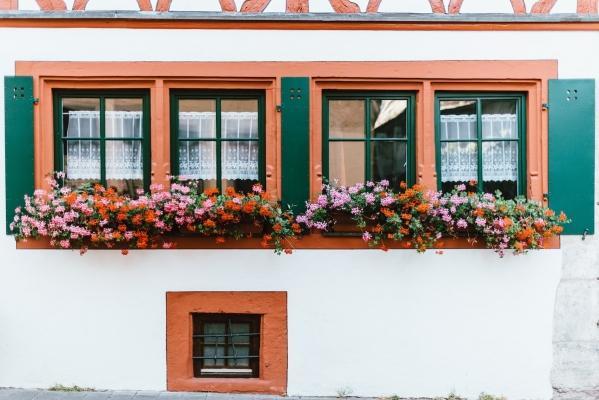 Gerani da balcone rampicanti multicolore