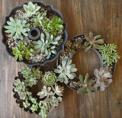 Vecchi stampi per torte in vasi per piante grasse, da adiamondinthestuff.com