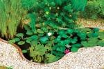 Un piccolo laghetto artificiale con ninfee, da Giardini d'Acqua