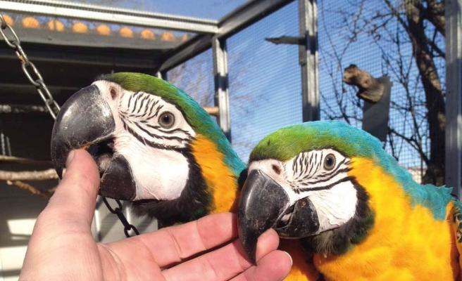 Voliera su misura per coppia di pappagalli - VPL