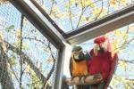 Voliera su misura per pappagalli Ara - VPL