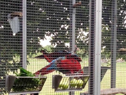 Voliera su misura per pappagalli grandi - VPL