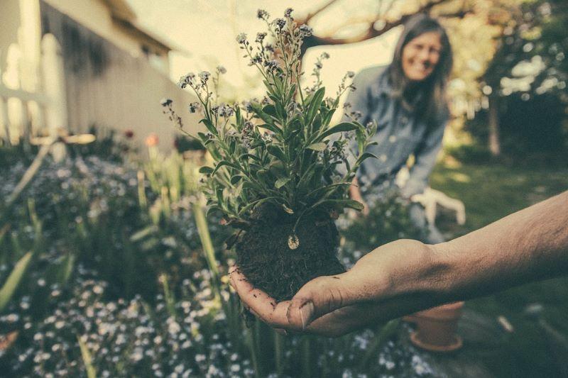 Coltivazione biologica delle piante