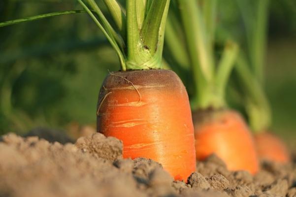 Prodotti naturali per la cura delle piante