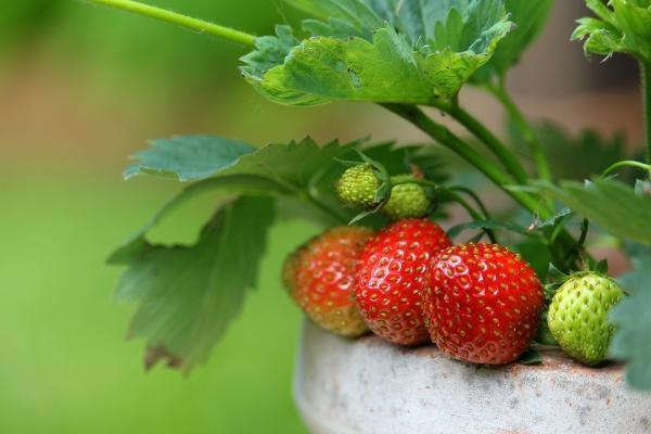 Coltivazione biologica ed ecosostenibile